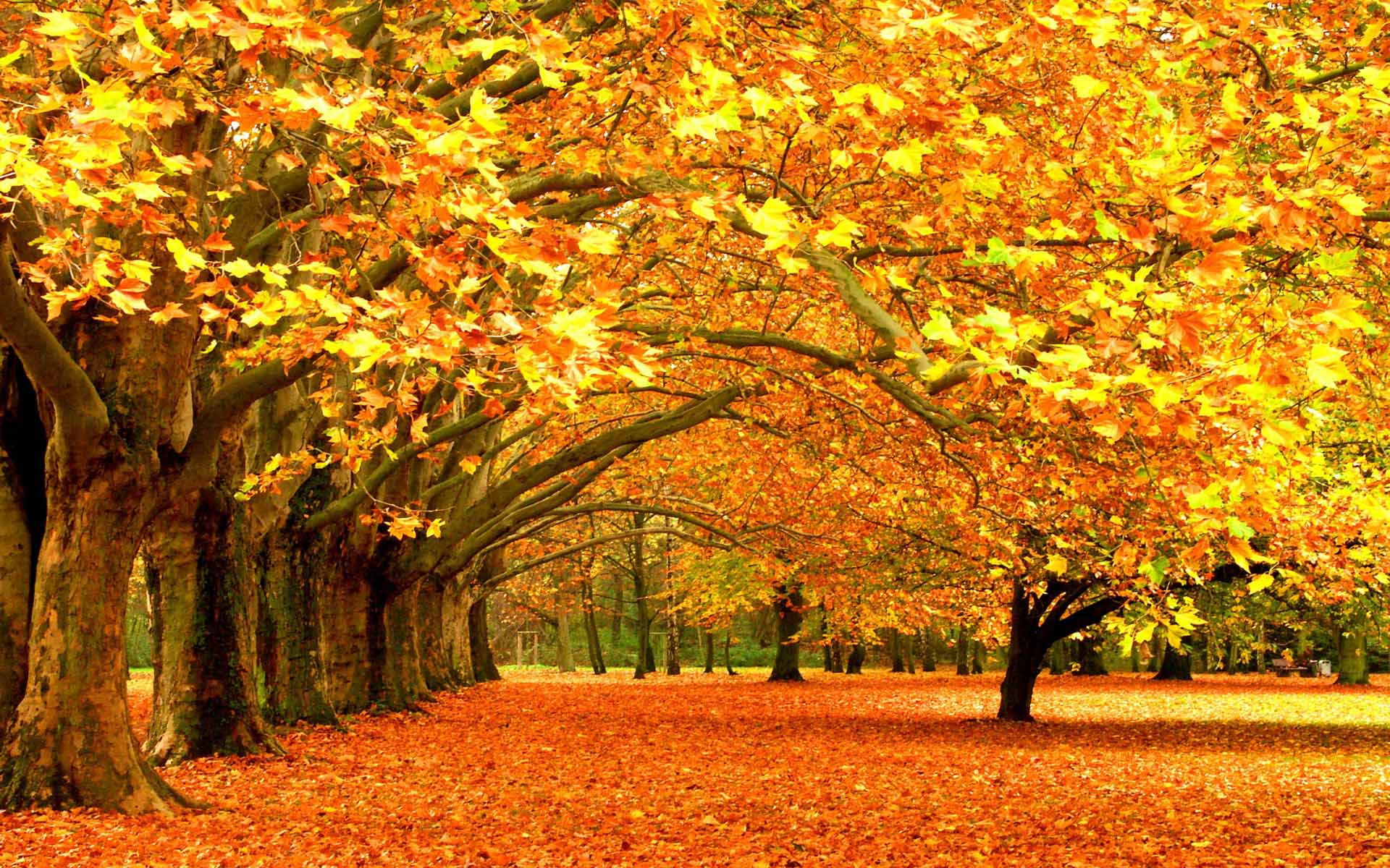 6976707 autumn fall background sgccc